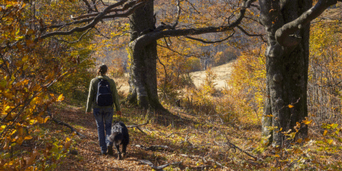 Ten Of The Best Walks For You & Your Dog In The Lake District