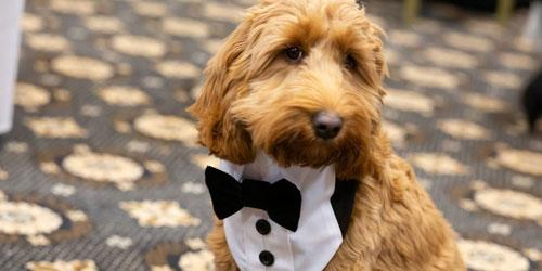 lake district wedding venues Include Your Dog in Your Lake District Wedding blog image