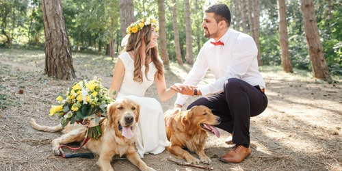 lake district weddings Ways to Include Your Dog in Your Lake District Wedding blog image