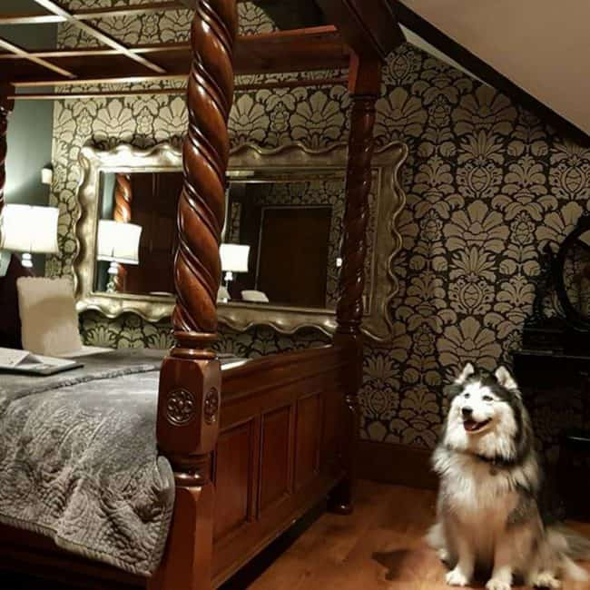 Dog Friendly Hotels Lake District Broadoaks Dogs Page Feature Image 4