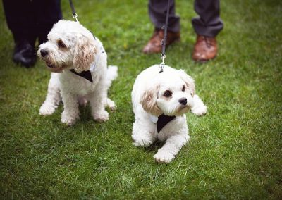 Dog Friendly Hotels Lake District Broadoaks Friends of Flo Gallery Image 8