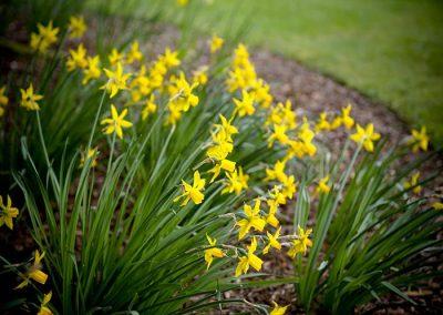 Lake District Hotels Broadoaks Spring Gallery Image 2